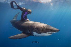 Die mit den Haien taucht