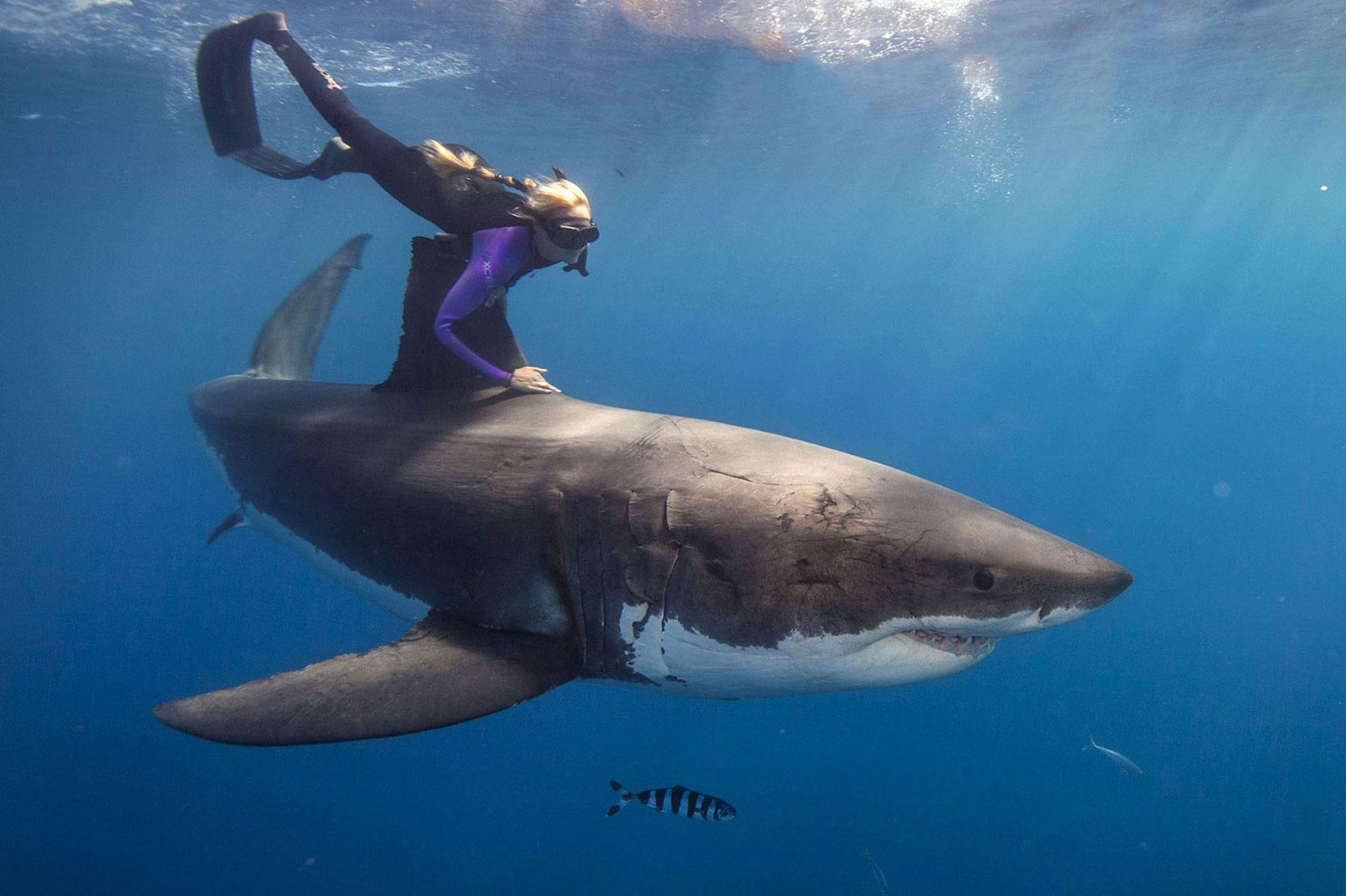 Foto: www.oceanramsey.com
