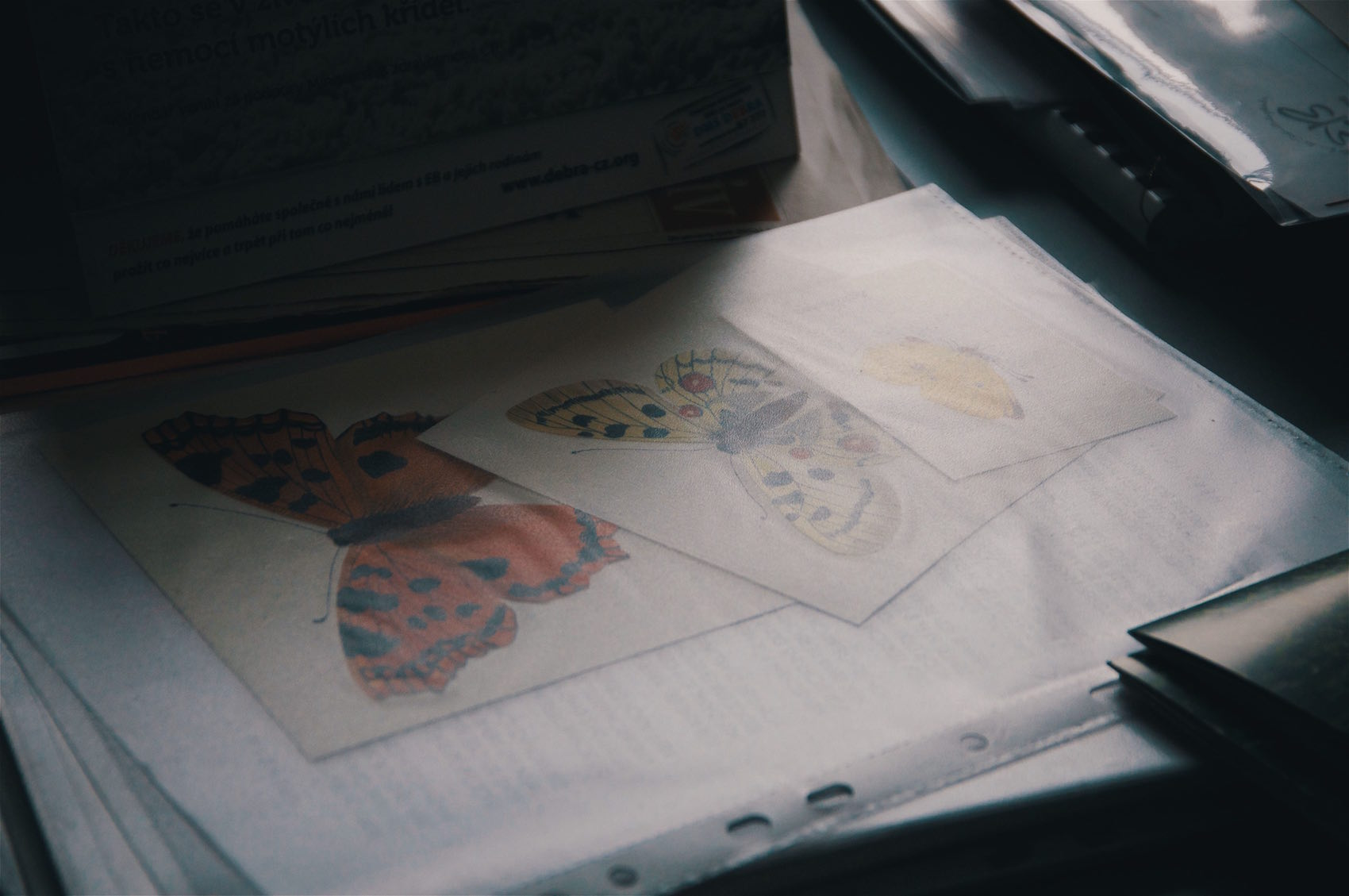 Schmetterlingskinder 5